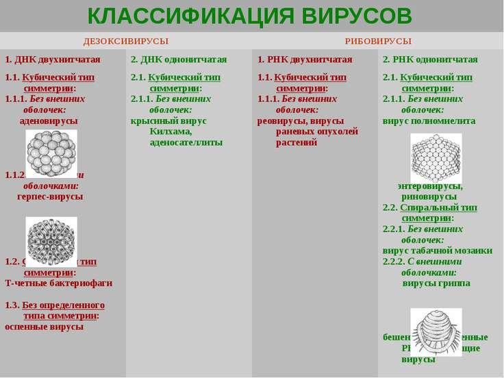 КЛАССИФИКАЦИЯ ВИРУСОВ ДЕЗОКСИВИРУСЫ РИБОВИРУСЫ 1. ДНК двухнитчатая 2. ДНК одн...