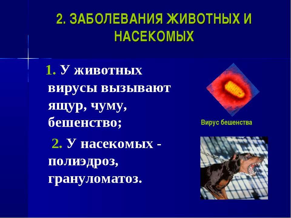 2. ЗАБОЛЕВАНИЯ ЖИВОТНЫХ И НАСЕКОМЫХ 1. У животных вирусы вызывают ящур, чуму,...