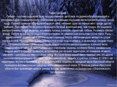 Тайга Средней Сибири – крупная сырьевая база государственных заготовок ля дер...