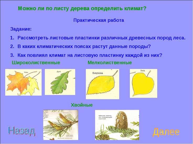 Можно ли по листу дерева определить климат? Практическая работа Задание: Расс...