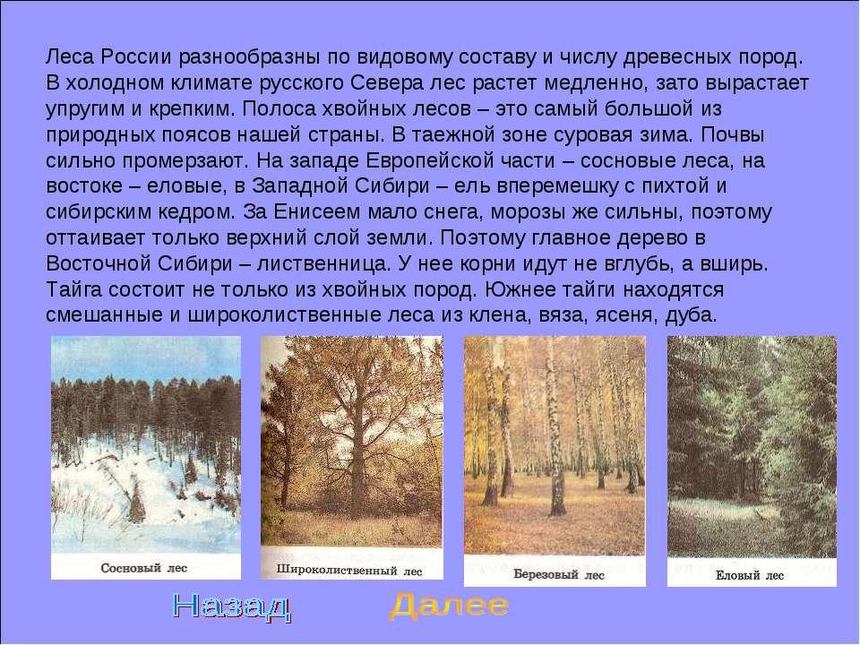 Леса России разнообразны по видовому составу и числу древесных пород. В холод...