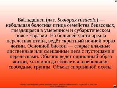 Ва льдшнеп (лат.Scolopax rusticola)— небольшая болотная птица семейства бек...