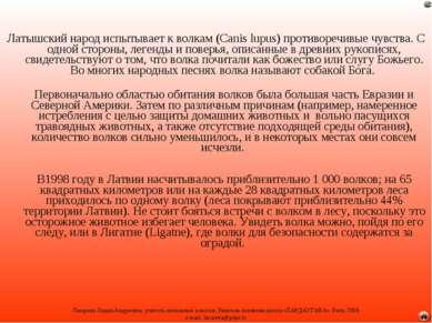 Латышский народ испытывает к волкам (Canis lupus) противоречивые чувства. С о...