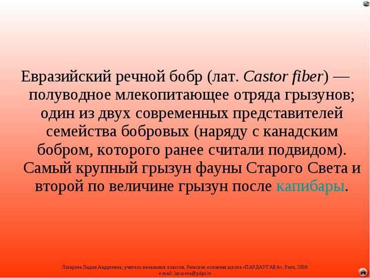 Евразийский речной бобр (лат.Castor fiber)— полуводное млекопитающее отряда...