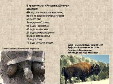 Галапагоссская гигантская черепаха Зубр – вымирающее животное! Зубровый питом...