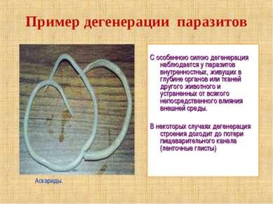 С особенною силою дегенерация наблюдается у паразитов внутренностных, живущих...