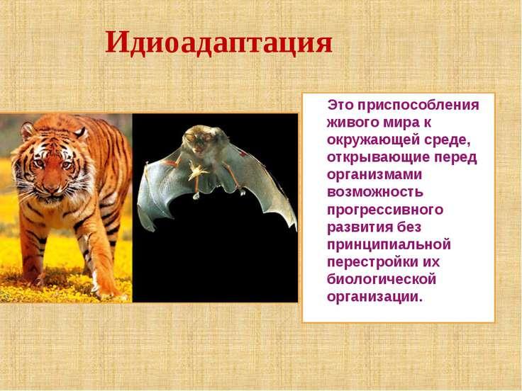 Идиоадаптация Это приспособления живого мира к окружающей среде, открывающие ...