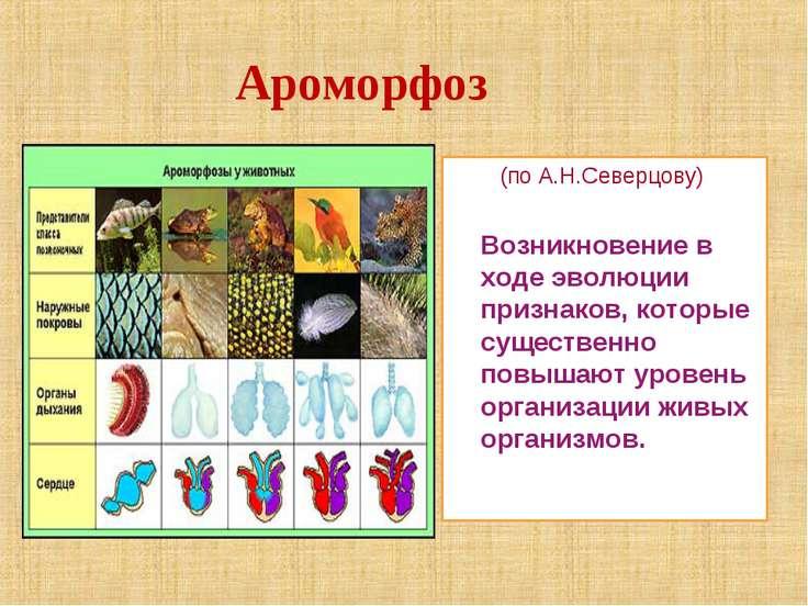 Ароморфоз (по А.Н.Северцову) Возникновение в ходе эволюции признаков, которые...