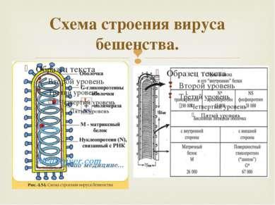 Схема строения вируса бешенства.