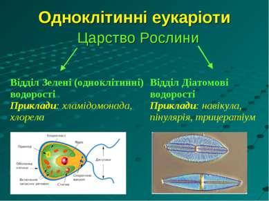 Одноклітинні еукаріоти Царство Рослини Відділ Зелені (одноклітинні) водорості...