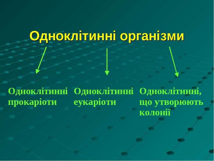 Одноклітинні організми Одноклітинні прокаріоти Одноклітинні еукаріоти Одноклі...