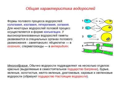 Формы полового процесса водорослей: хологамия, изогамия, гетерогамия, оогамия...