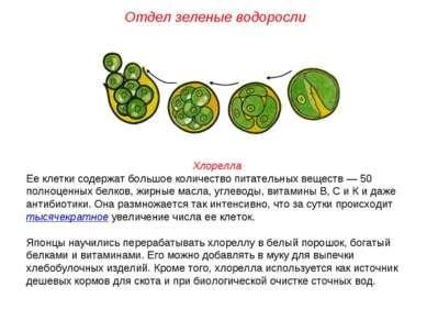 Хлорелла Ее клетки содержат большое количество питательных веществ — 50 полно...