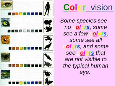Color vision Some species see no colors, some see a few colors, some see all ...