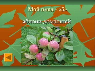 Мой плод - «5» яблони домашней