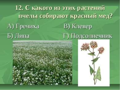 12. С какого из этих растений пчелы собирают красный мед? А) Гречиха В) Клеве...