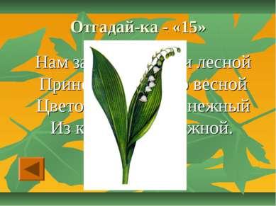 Отгадай-ка - «15» Нам запах свежести лесной Приносит позднею весной Цветок ду...