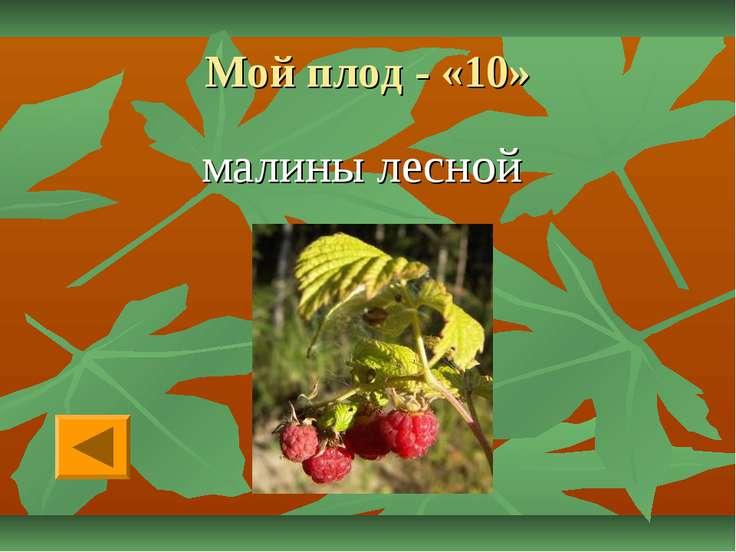 Мой плод - «10» малины лесной
