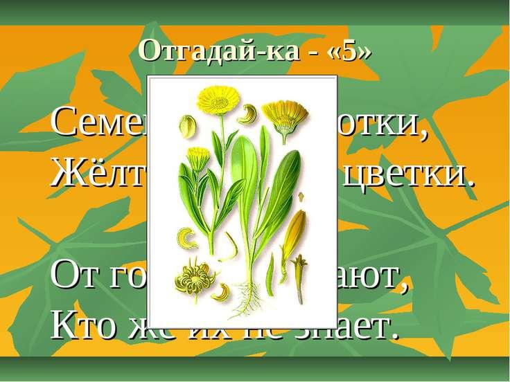 Отгадай-ка - «5» Семена, как коготки, Жёлто-красные цветки. От горла помогают...