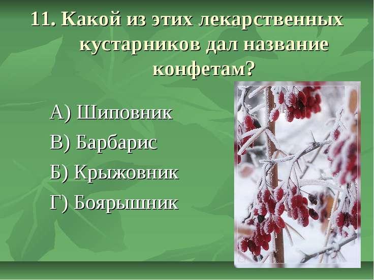 11. Какой из этих лекарственных кустарников дал название конфетам? А) Шиповни...