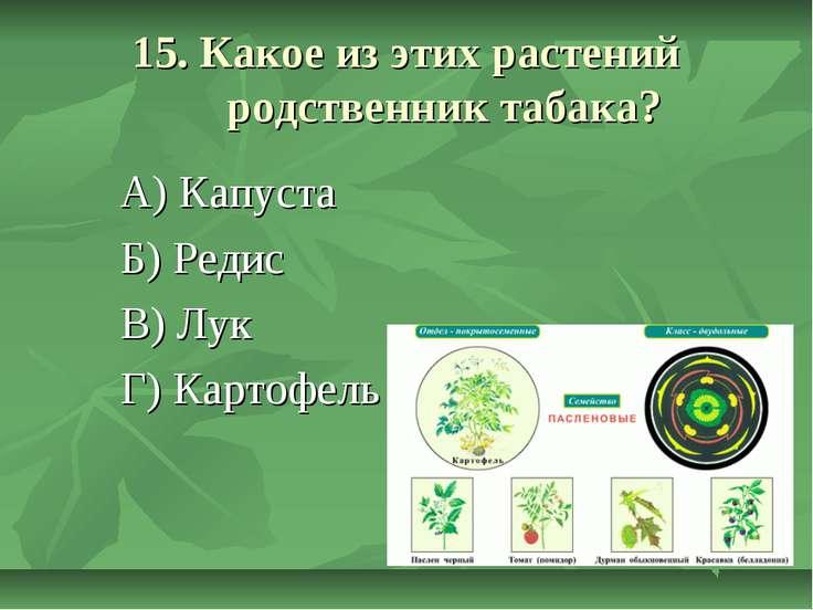 15. Какое из этих растений родственник табака? А) Капуста Б) Редис В) Лук Г) ...