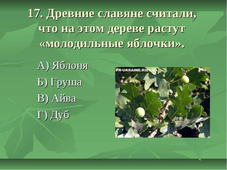17. Древние славяне считали, что на этом дереве растут «молодильные яблочки»....