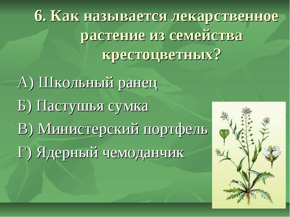 6. Как называется лекарственное растение из семейства крестоцветных? А) Школь...