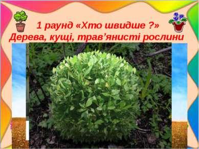 1 раунд «Хто швидше ?» Дерева, кущі, трав'янисті рослини малюнки тварин: Дер...