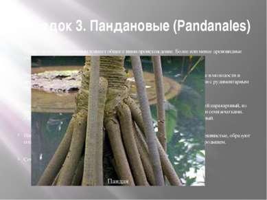 Порядок 3. Пандановые (Pandanales) Стоит близко к циклантовым и имеет общее с...