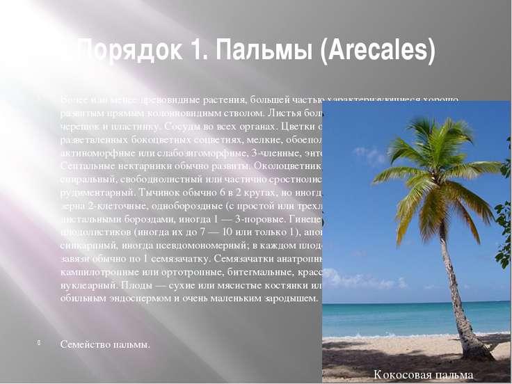 Порядок 1. Пальмы (Arecales) Более или менее древовидные растения, большей ча...