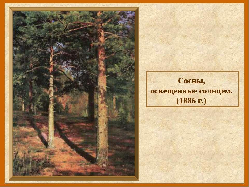 Сосны, освещенные солнцем. (1886 г.)