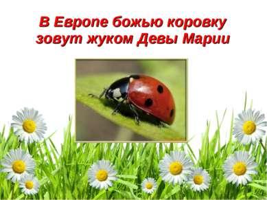 В Европе божью коровку зовут жуком Девы Марии