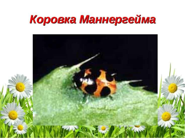Коровка Маннергейма