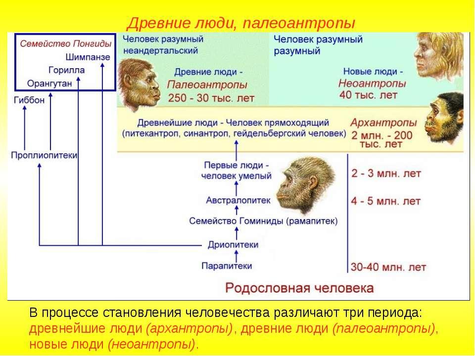 В процессе становления человечества различают три периода: древнейшие люди (а...