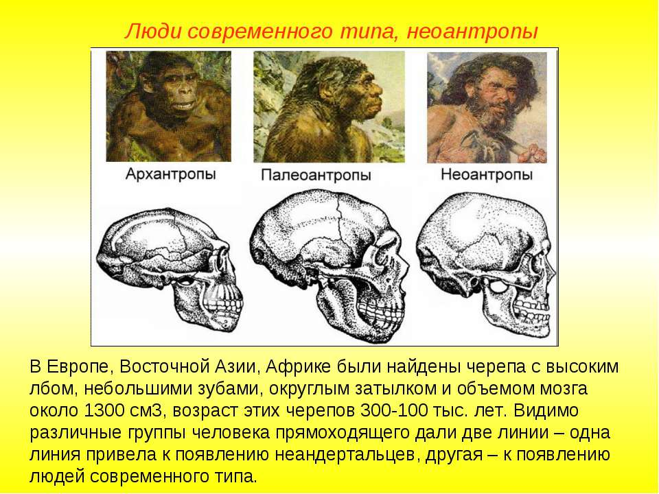 Люди современного типа, неоантропы В Европе, Восточной Азии, Африке были найд...