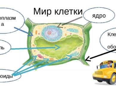 вакуоль Мир клетки Клеточная оболочка Цитоплазма Органоиды ядро