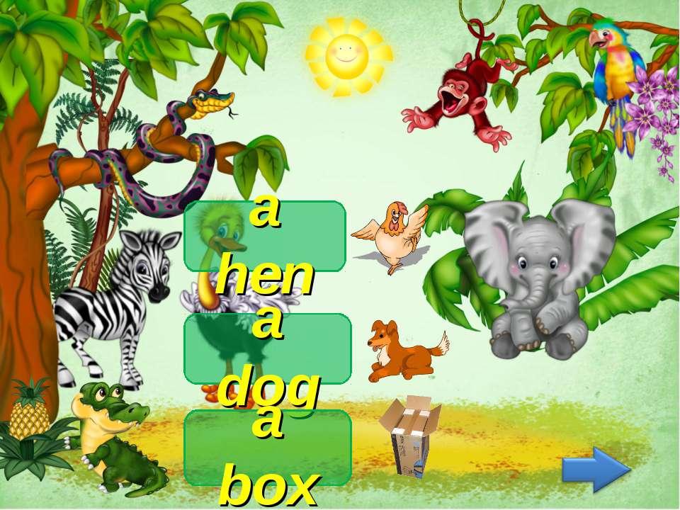 a hen a dog a box