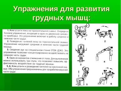 Упражнения для развития грудных мышц: