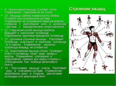 Строение мышц 9. Икроножная мышца. Сгибает стопу. Упражнение: поднимание на н...