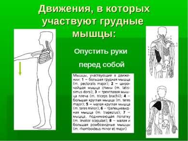 Движения, в которых участвуют грудные мышцы: Опустить руки перед собой