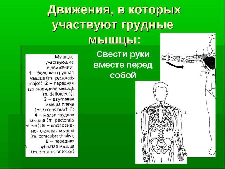 Движения, в которых участвуют грудные мышцы: Свести руки вместе перед собой