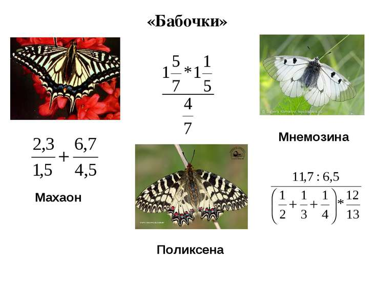 «Бабочки» Махаон Поликсена Мнемозина