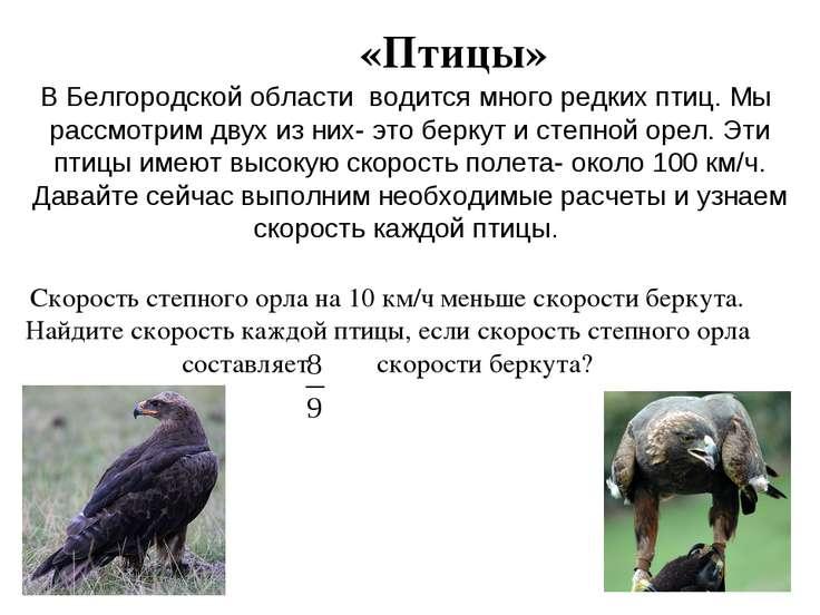 «Птицы» В Белгородской области водится много редких птиц. Мы рассмотрим двух ...
