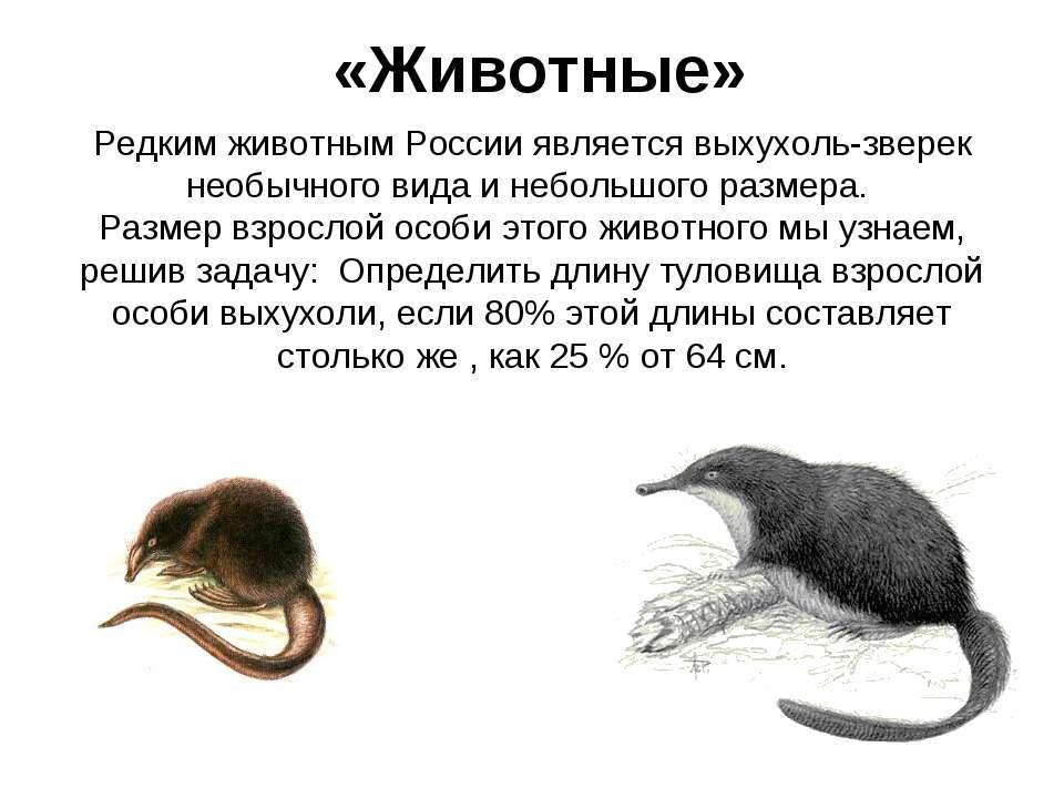 «Животные» Редким животным России является выхухоль-зверек необычного вида и ...