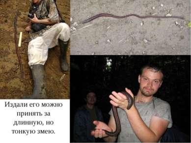Издали его можно принять за длинную, но тонкую змею.