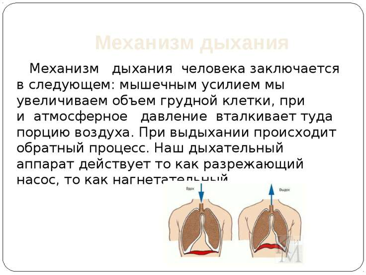 Механизм дыхания Механизмдыханиячеловека заключается в следующем: мышечн...
