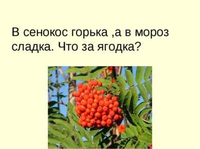 В сенокос горька ,а в мороз сладка. Что за ягодка?