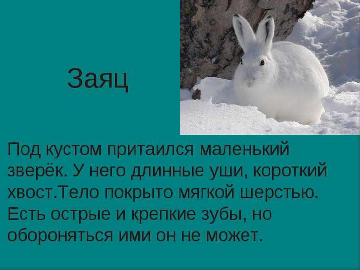 Под кустом притаился маленький зверёк. У него длинные уши, короткий хвост.Тел...