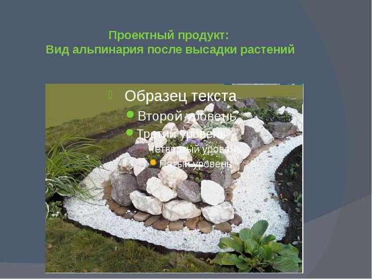 Проектный продукт: Вид альпинария после высадки растений