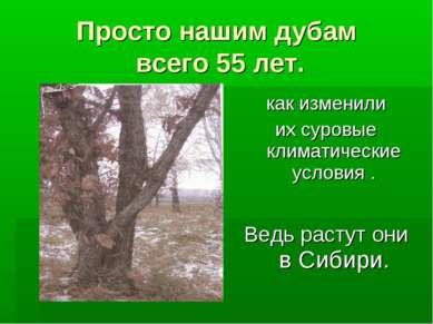 Просто нашим дубам всего 55 лет. Ведь растут они в Сибири. как изменили их су...